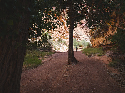 A hike in Spring Canyon. Capitol Reef National Park, Utah.