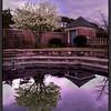 Botanic Reflections