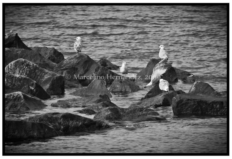 Gulls again, don't ask how that happened. it just did.