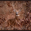 "I call him Pete the Buck! (like the dog from the ""Little Rascal's"") Falls here, prepare for winter."