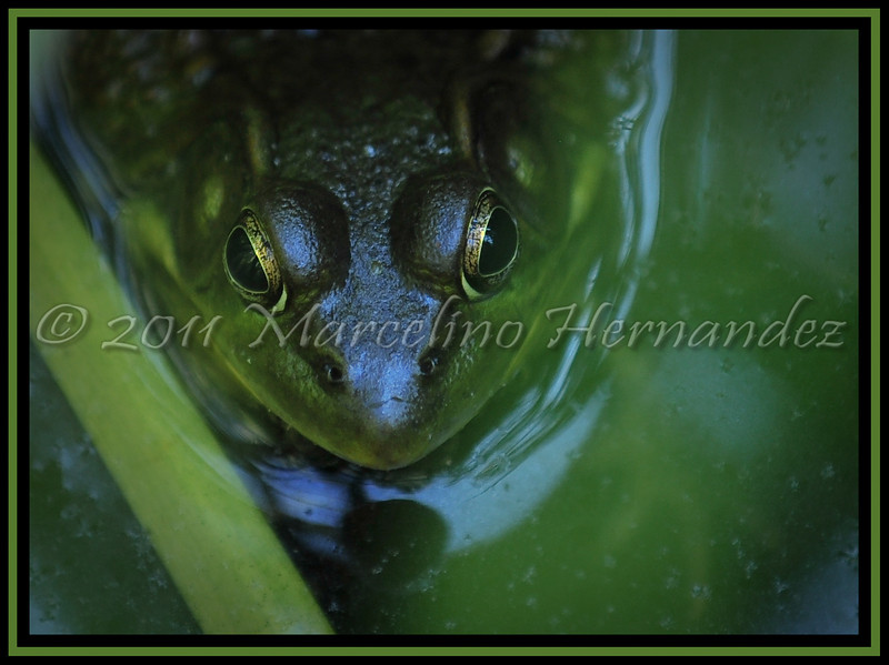 Seeing myself through the eyes of a frog.