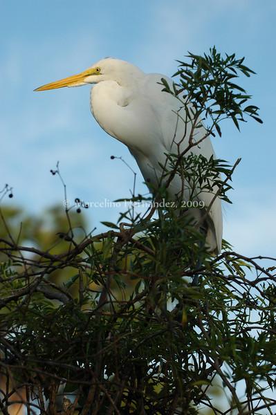 Florida waterfowl at sunset.