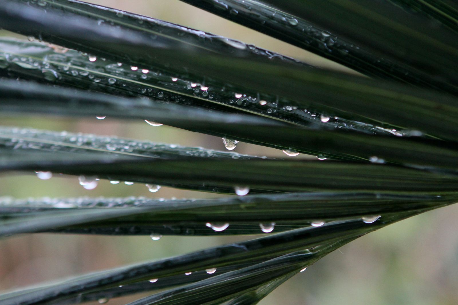 Raindrops taking a rest