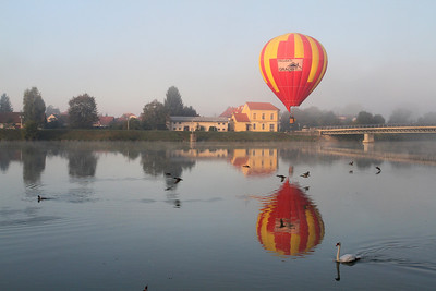 A hot air balloon in the early morning Drava mist joined by ducks and a swan