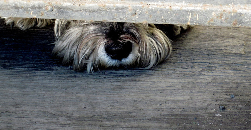 """February: """"Puppy Love"""" ..waiting at the door patiently for the one you love."""