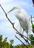 Card title: White Egret