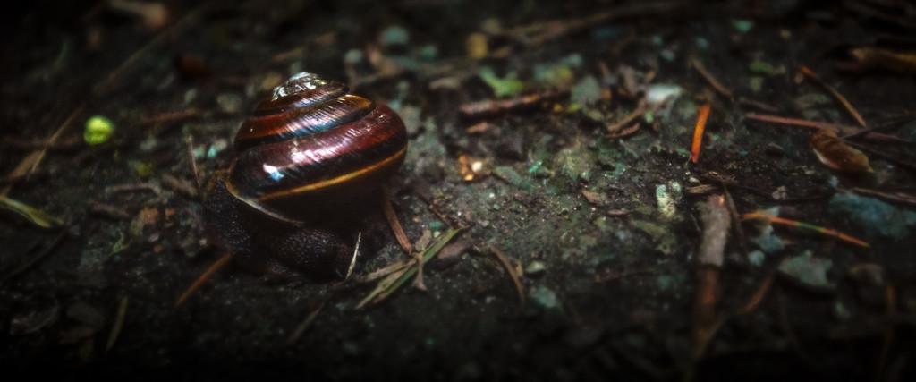 Snail on the Road - Carkeek Park - April 27th, 2016