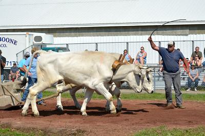 Oxen Whip