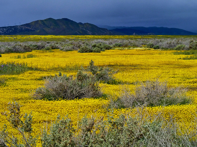 Carrizo Plain, San Luis Obispo County, CA<br /> Temblor Mountains, in rain, background.  3/31/10