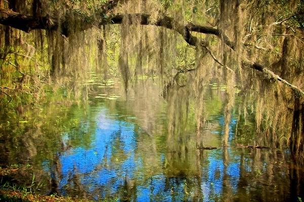 WPP2270  Monet's Pond