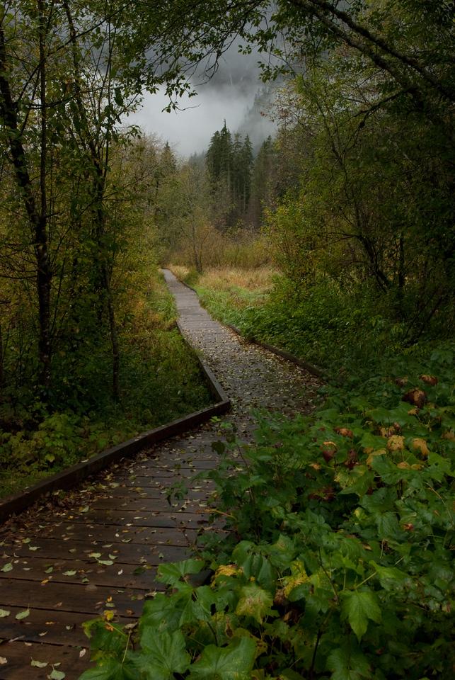 Cascade Scenery