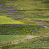 Castelluccio Plateau