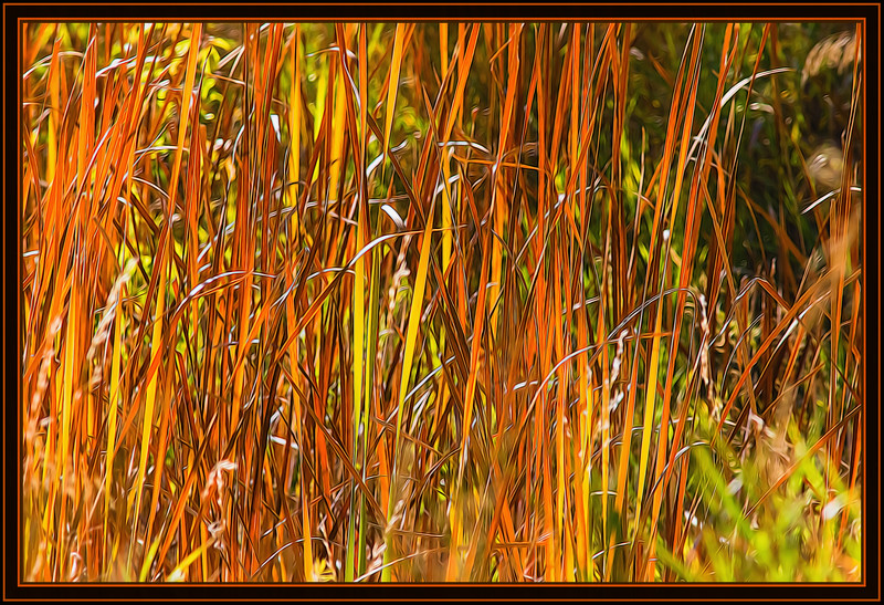 Grass in Gold