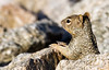 I have heard of slow, but this is ridiculous.<br /> Just how long does he expect me to hold this pose…<br /> <br /> Squirrel<br /> <br /> One of the three that I always look for at Rio Salado...