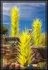 Desert Botanical Garden - (DBG), CHIHULY