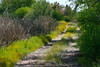 Trail Between Lakes<br /> <br /> This is a trial in the Riparian Area where I often shoot Birds.