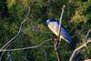Black-Crowned Night Heron<br /> <br /> Shot at Tres Rios Wetlands Phoenix, AZ