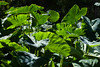 Flora<br /> <br /> The Light on the leaves emphasized their green quality...
