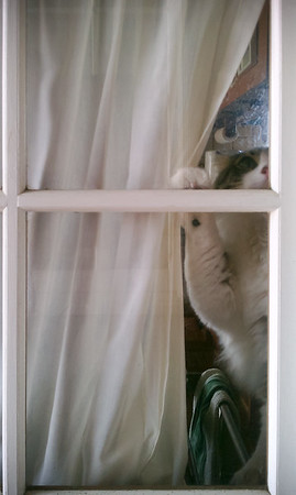 He tries to open the window, but I prefer to come in through the front door