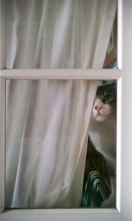 Cisco pushes aside the drapes and sees me waiting on the porch