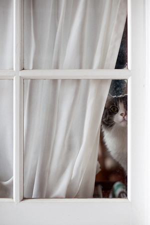 Annie peeks out the window as I find the key for the door