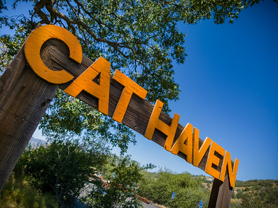 Today's destination is Project Survival's Cat Haven.  This one caught mom completely by surprise because she was not familiar with it.