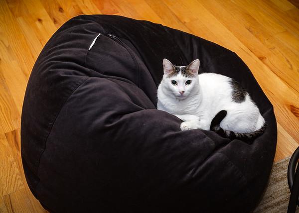Chloe on the bean bag
