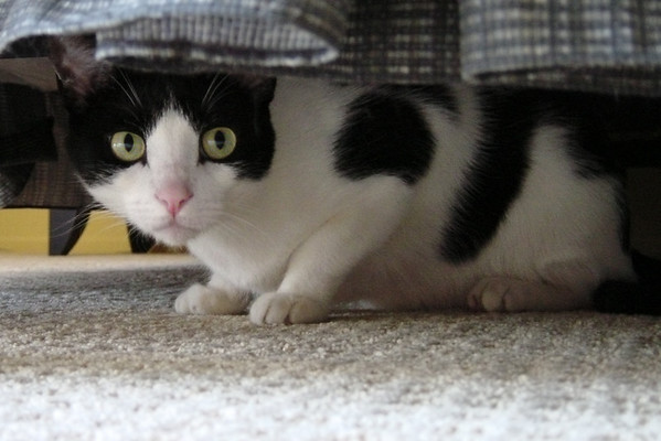 ...and Max, both hiding under the bed