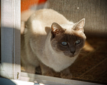 We step outside to enjoy a surprisingly warm afternoon.  Ellie must stay behind the screen because she and her brother are indoor cats