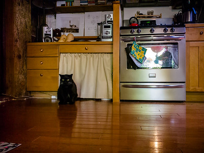 We poke into the cottage to visit Nuit, the cat that belongs to their current tenant