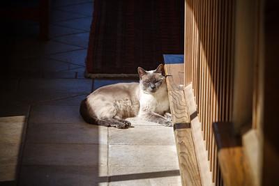 Following the pool of sunlight like one of my favorite Hallmarks of Felinity