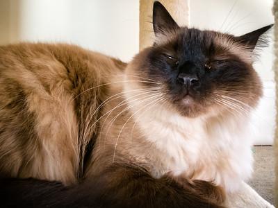 Milo is a pretty boy
