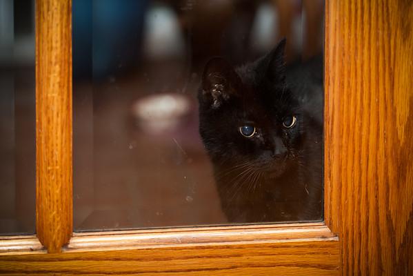 Inkie peeks inside Grandma's house, senses something unusual is going on inside