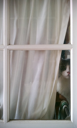 Now Annie is peeking outside.  Who is going to let me in?