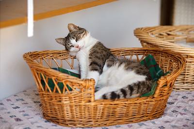 That looks like a comfy basket