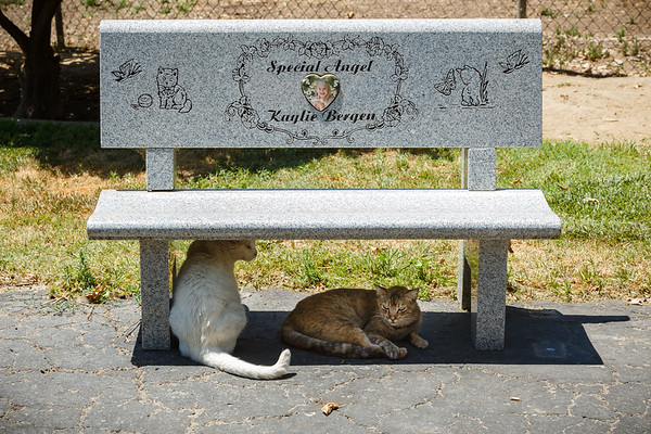 Cats lounge under one of the tribute benches