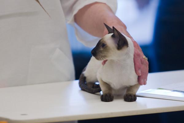 Kitten Class