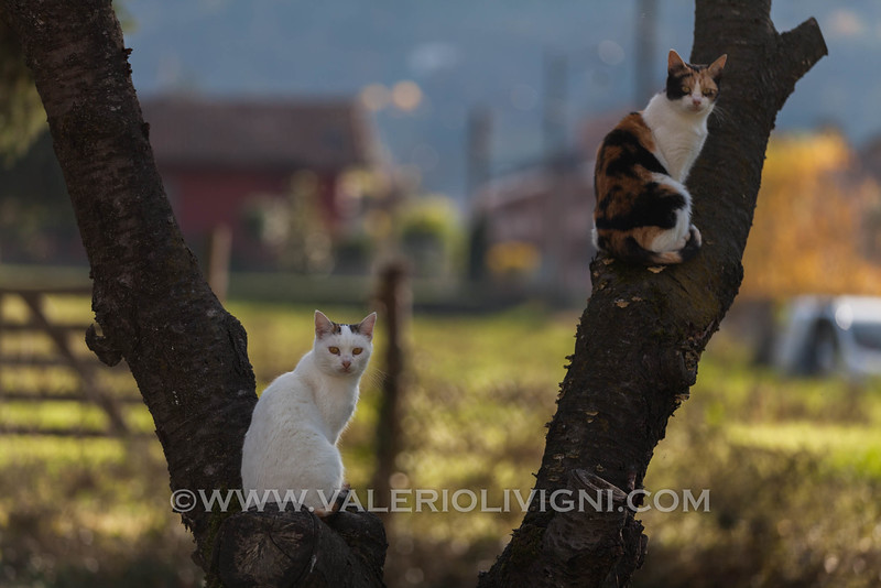 Cats of Cortemilia