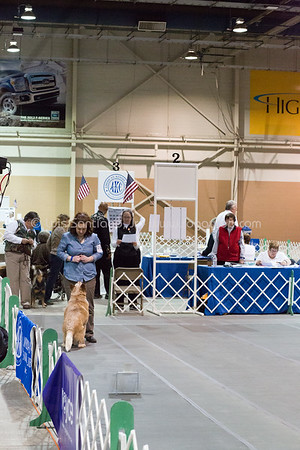 AKC Nationals featuring CDAA participants