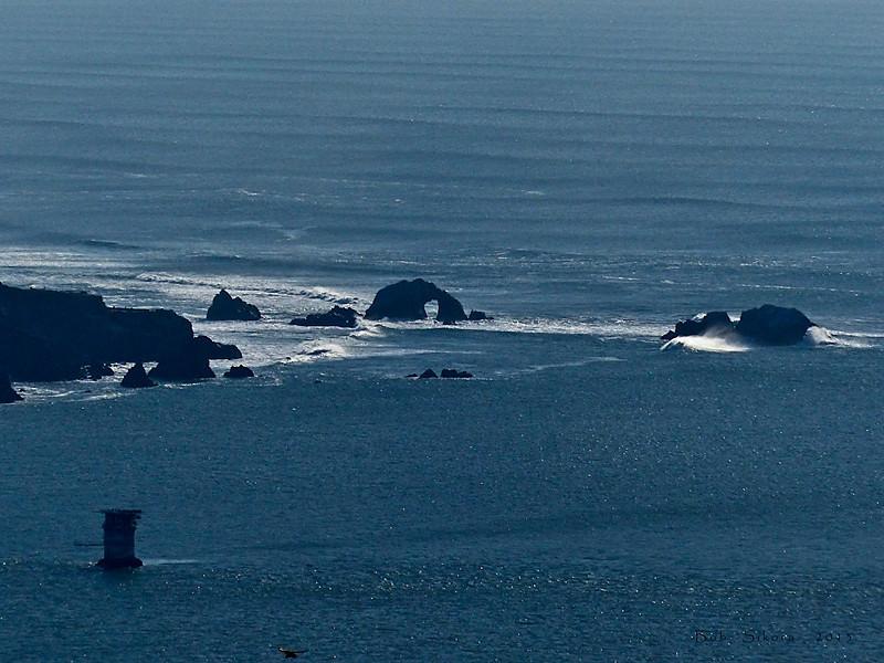Pt. Lobos, Mile Rock Lighthouse, Seals Rocks<br /> San Francisco, CA, 2013/01/19<br /> &#9664 Myrtaceae ----- Onagraceae &#9658