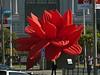 Large Rose<br /> Civic Center, San Francisco, 2012/05/23<br /> &#9664 Rhamnaceae ----- Rosaceae &#9658