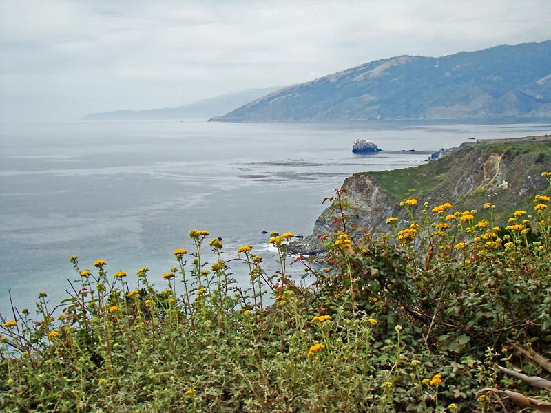<em>Eriophyllum confertiflorum</em>, Golden Yarrow, native.  <em>Asteraceae</em> (= <em>Compositae</em>, Sunflower family).   Silver Peak Wilderness, Los Padres NF, Monterey Co., CA  6/15/09  jm2p325