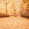 New York - Autumn - Central Park - Carpet of Leaves