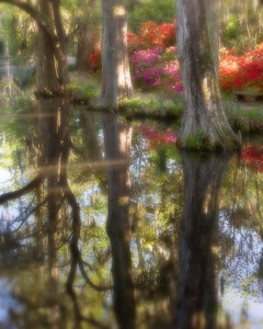 Azaleas and Cypress reflected in the lake at Magnolia.