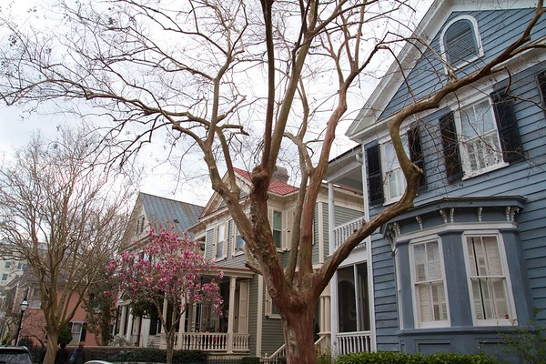 Charleston Downtown 2020 Best 5