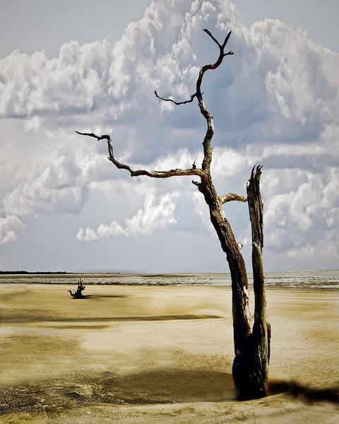 Capers Island, South Carolina