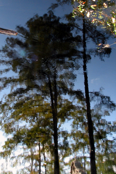 Cypress Gardens Reflection I