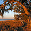 Hobcaw Point Oaks at Sunset
