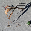 Sullivan's Island Beach Shadows