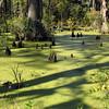 Cypress Gardens swamp